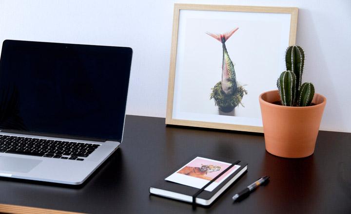 Từ lâu việc đặt cây xương rồng trên bàn làm việc đã là công việc phổ biến với những người làm việc văn phòng.